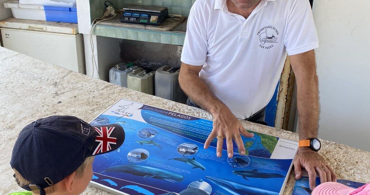dolfijnen spotten in Corsica